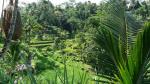 Riziere-a-Bali.jpg